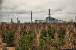 Рыжий лес в Чернобыле (фото с сайта people-of-chernobyl.ru) - InformPskov.Ru